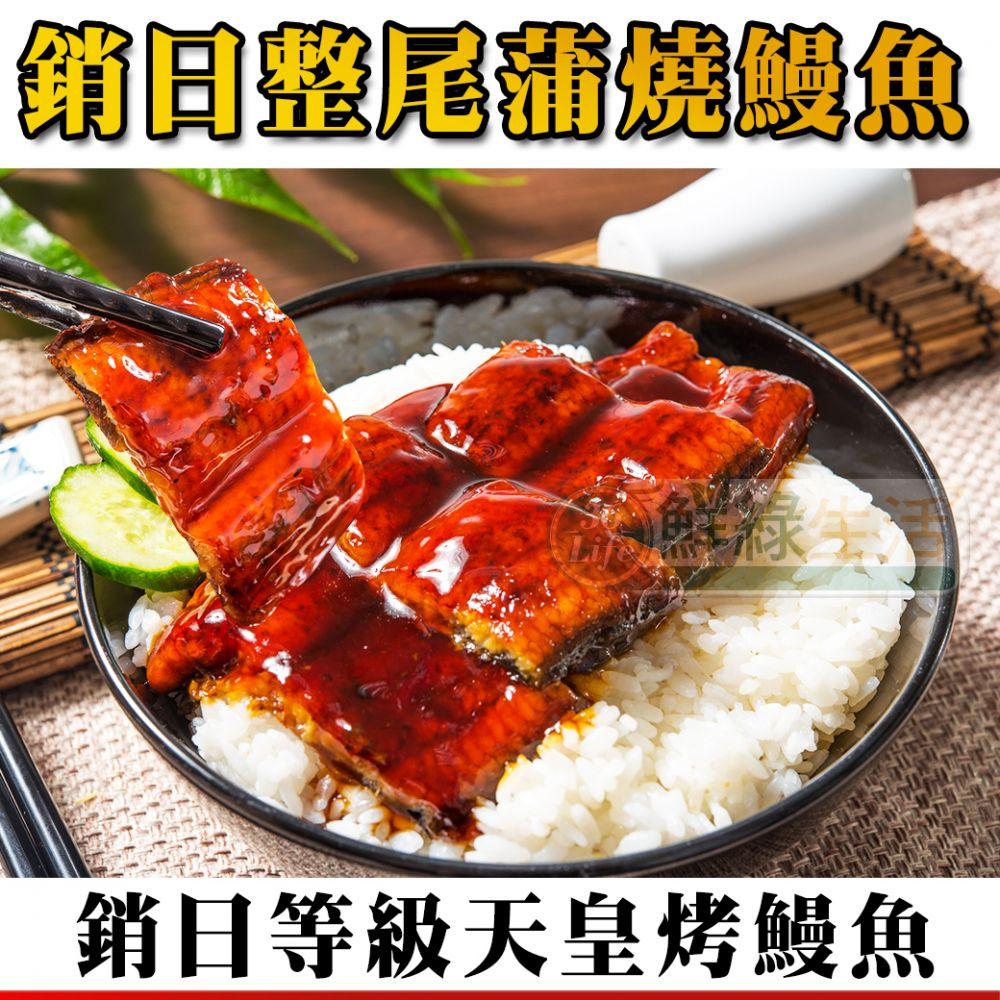 頂級直輸日本蒲燒烤鰻魚
